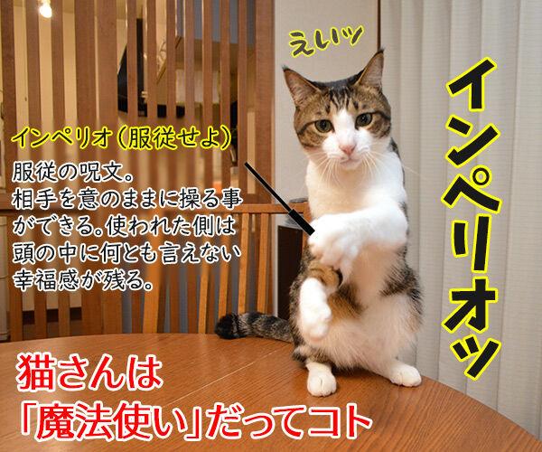下僕な理由がわかったの 猫の写真で4コマ漫画 4コマ目ッ