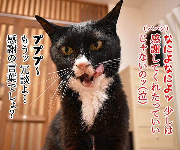 『勤労感謝の日』だから感謝してほしいのッ 猫の写真で4コマ漫画 3コマ目ッ