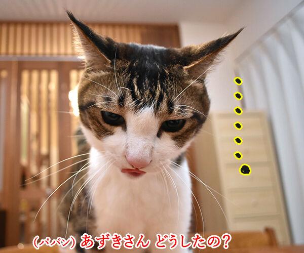 目と目で通じ合う仲になりたいわッ 猫の写真で4コマ漫画 1コマ目ッ