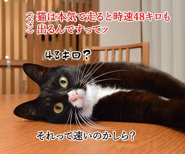 猫の足の速さは? 猫の写真で4コマ漫画 1コマ目ッ