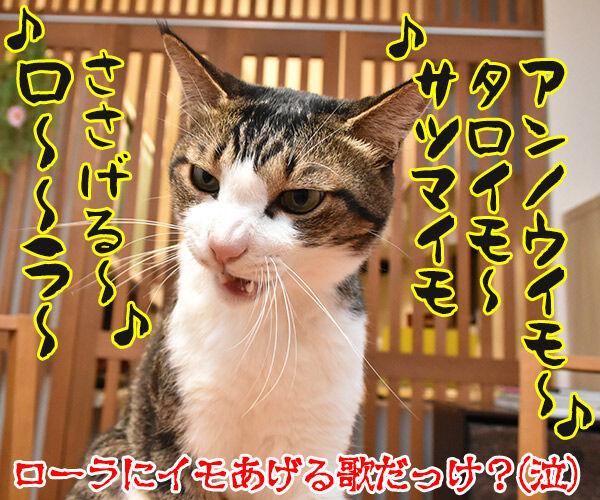 ローラさんが保険所から猫を引き取って家族にしたんですってッ 猫の写真で4コマ漫画 4コマ目ッ