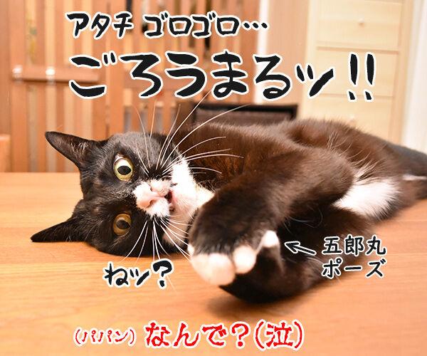 こちょこちょ ゴロゴロ 猫の写真で4コマ漫画 4コマ目ッ