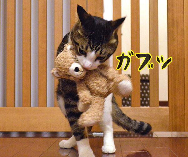 今日も明日も明後日も 猫の写真で4コマ漫画 2コマ目ッ