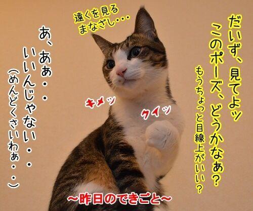めんどうなのよッ 猫の写真で4コマ漫画 2コマ目ッ