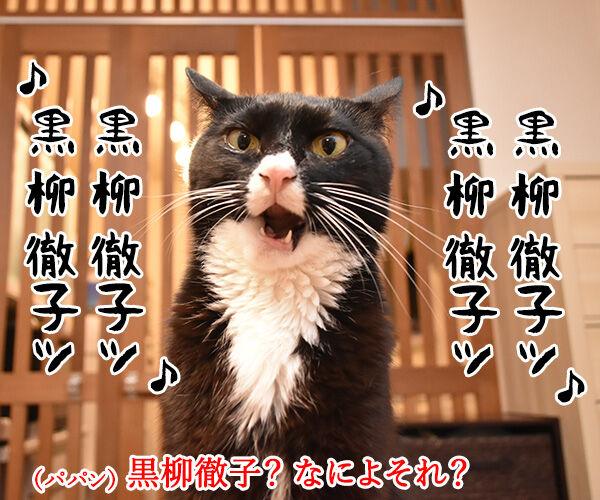 黒柳徹子の歌 猫の写真で4コマ漫画 1コマ目ッ