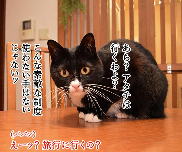 GO TO トラベルキャンペーンが始まったのよッ 猫の写真で4コマ漫画 3コマ目ッ