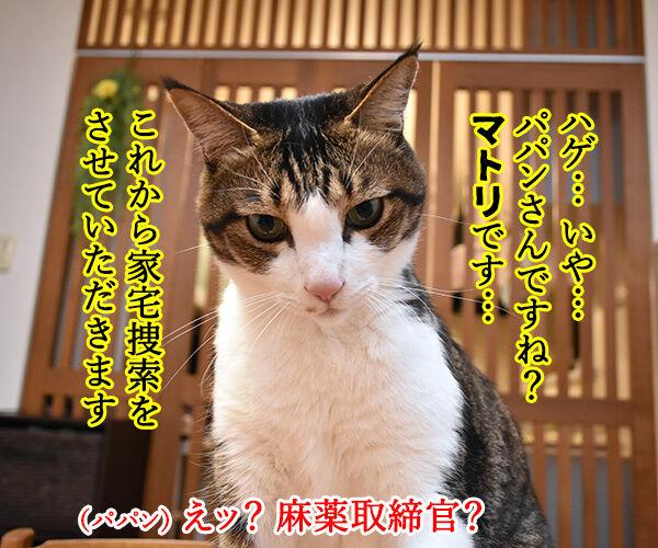 パパンちにマトリが家宅捜索なのッ 猫の写真で4コマ漫画 1コマ目ッ