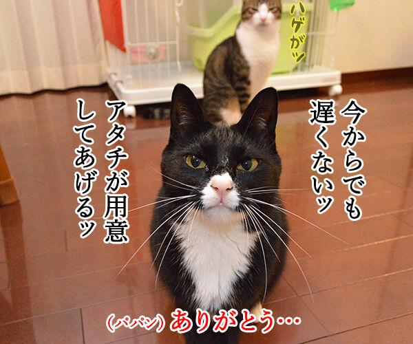 母の日のプレゼント 猫の写真で4コマ漫画 3コマ目ッ