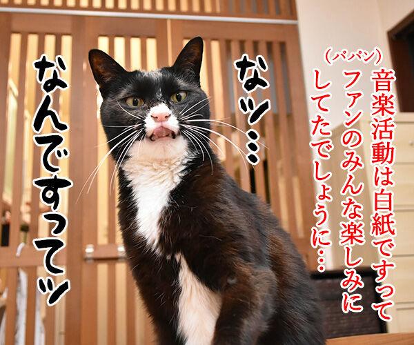 ボクたちは4人のTOKIOを応援しますッ 猫の写真で4コマ漫画 3コマ目ッ