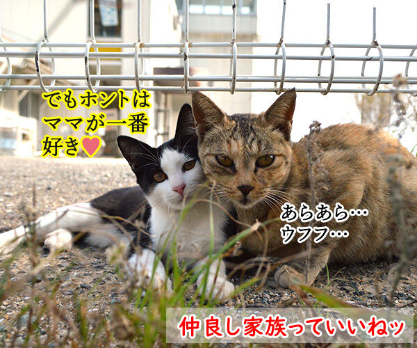 猫島 其の五 猫の写真で4コマ漫画 4コマ目ッ
