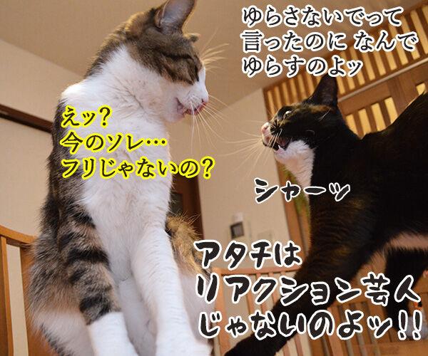 ゆらさないでッ 猫の写真で4コマ漫画 4コマ目ッ