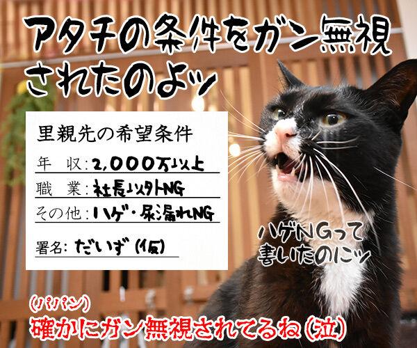 『野良猫の拾い方』って本を買ったのよッ 猫の写真で4コマ漫画 4コマ目ッ