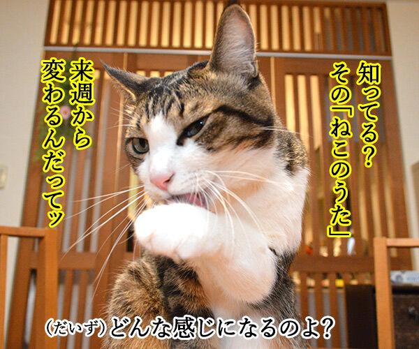 『あたし、ねこ』が変わるってホント? 猫の写真で4コマ漫画 2コマ目ッ