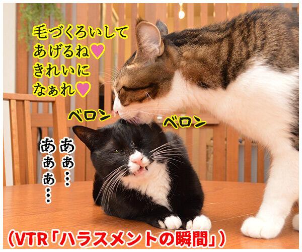ハラスメントの定義を教えてください 猫の写真で4コマ漫画 3コマ目ッ