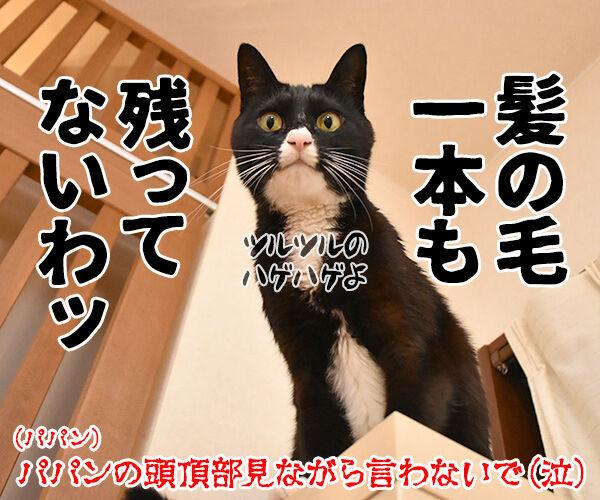 今年やり残したコト 猫の写真で4コマ漫画 4コマ目ッ