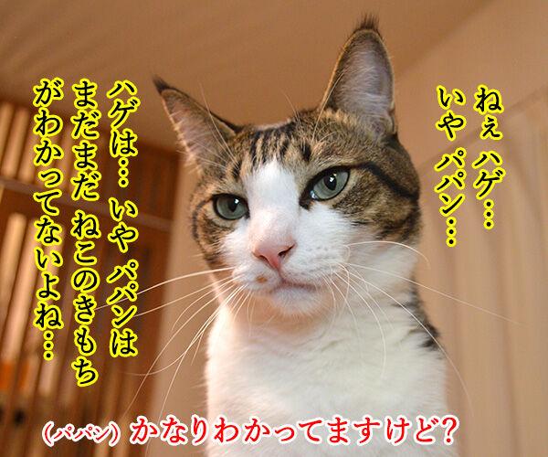 教えてッ あずき先生ッ 猫の写真で4コマ漫画 1コマ目ッ