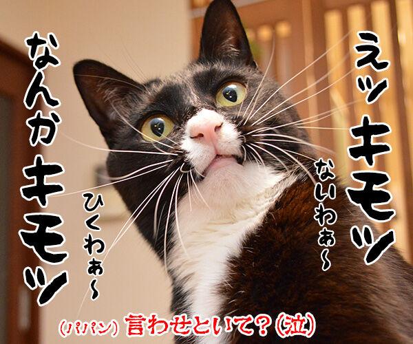 「好き」って10回言ってみてッ 猫の写真で4コマ漫画 4コマ目ッ
