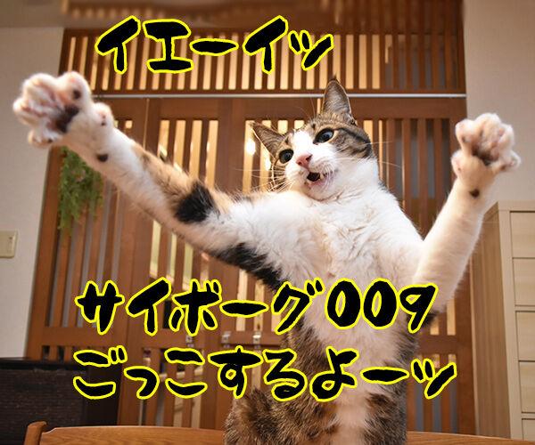サイボーグ009ごっこするよーッ 猫の写真で4コマ漫画 1コマ目ッ