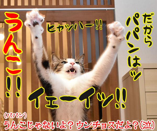 6月16日は『和菓子の日』なんですってッ 猫の写真で4マ漫画 4コマ目ッ
