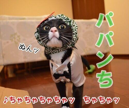 ひとりアド街コレクション 猫の写真で4コマ漫画 1コマ目ッ