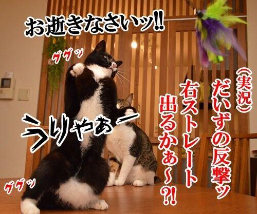 じゃらし VS だいず 猫の写真で4コマ漫画 3コマ目ッ
