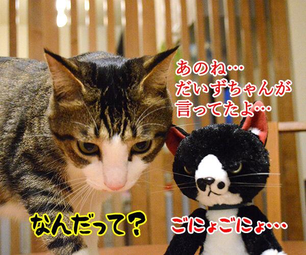 あのね… 猫の写真で4コマ漫画 1コマ目ッ