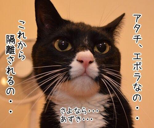 アタチ、じつは… 猫の写真で4コマ漫画 3コマ目ッ