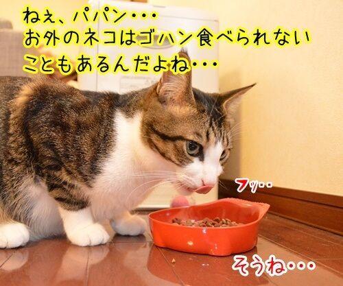 感謝のキモチ 猫の写真で4コマ漫画 2コマ目ッ