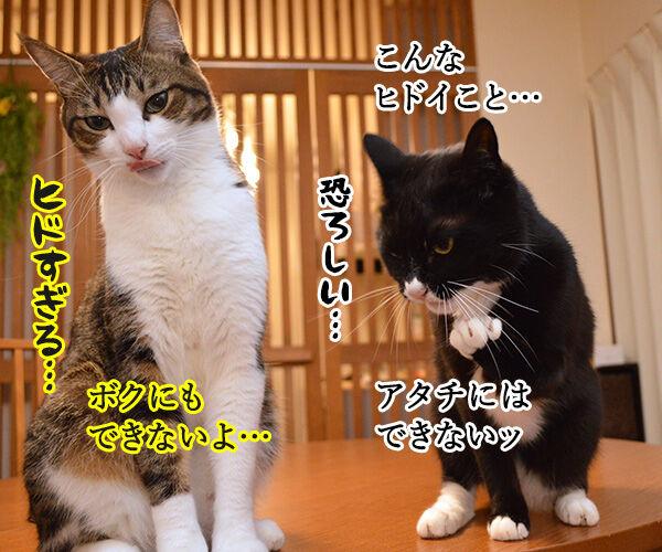 だれがやったのッ? 猫の写真で4コマ漫画 2コマ目ッ