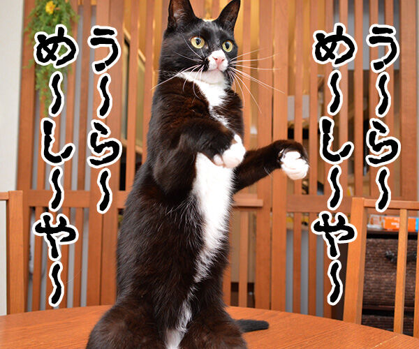 パパンちの怪談 猫の写真で4コマ漫画 2コマ目ッ
