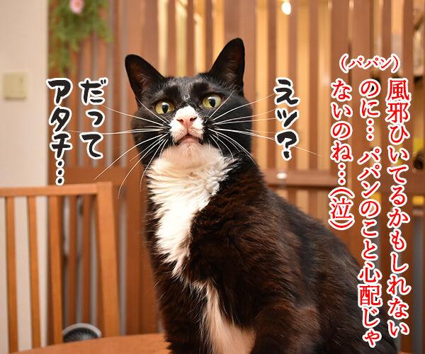 大ズ門未知子は一匹にゃんこのドクターなのッ 猫の写真で4コマ漫画 3コマ目ッ