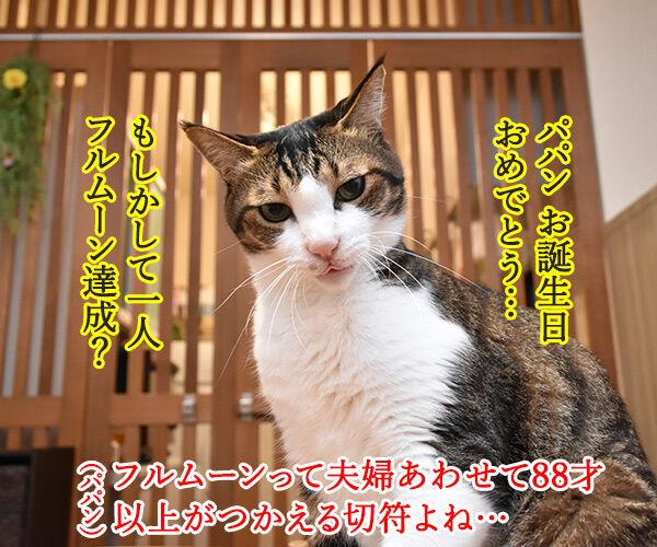 昨日はパパンのお誕生日だったのよッ 猫の写真で4コマ漫画 2コマ目ッ