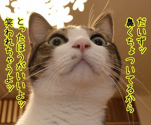 鼻くちょついてるッ 猫の写真で4コマ漫画 1コマ目ッ