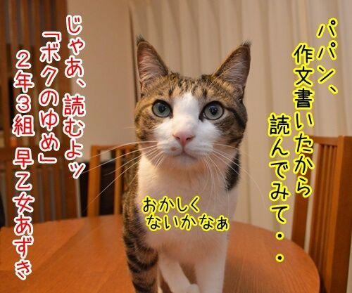 ボクのゆめ 猫の写真で4コマ漫画 1コマ目ッ