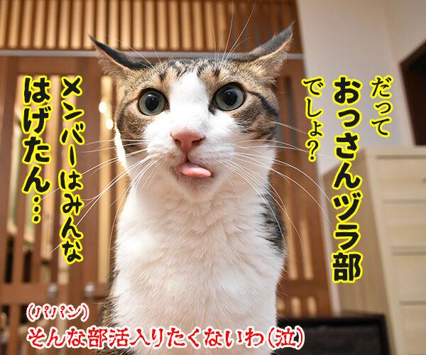 おっさんずラブのDVDをイッキ見しちゃったのよッ 猫の写真で4コマ漫画 4コマ目ッ