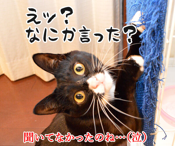 お前が俺しかいないって言うなら 猫の写真で4コマ漫画 4コマ目ッ