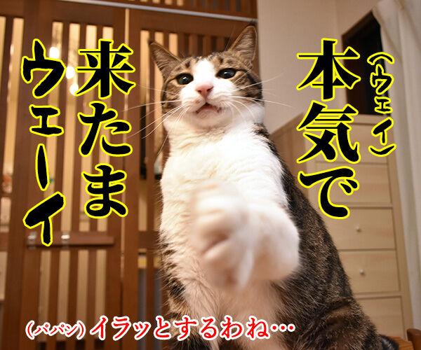 猫じゃらさんでウェイウェーイ 猫の写真で4コマ漫画 2コマ目ッ