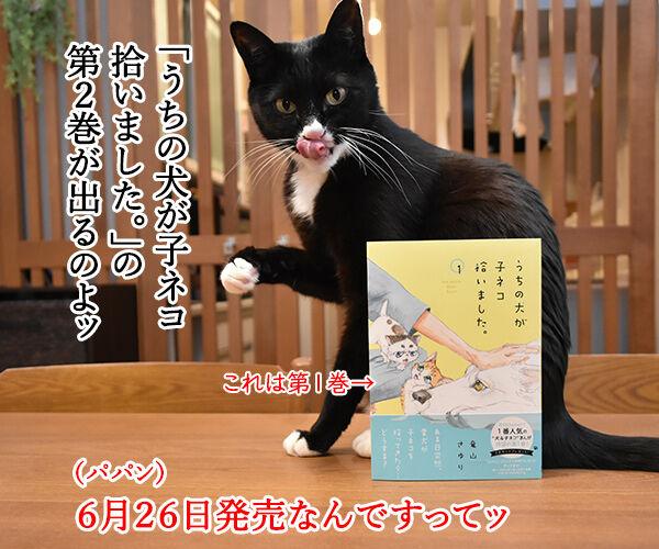 『うちの犬が子ネコ拾いました。』第2巻は6月26日発売なのよッ 猫の写真で4コマ漫画 1コマ目ッ