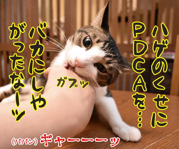 PDCAができてないって怒られたの 猫の写真で4コマ漫画 2コマ目ッ