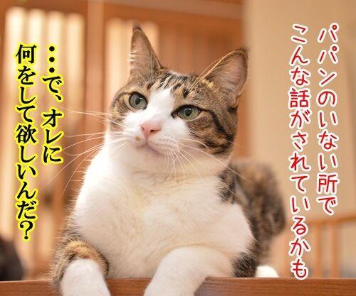 パパンが調子わるいとき 猫の写真で4コマ漫画 1コマ目ッ