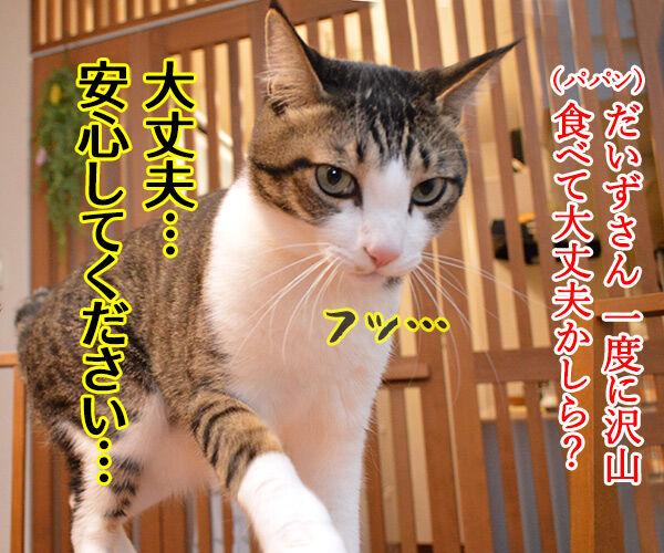 とにかく明るいあずき 猫の写真で4コマ漫画 3コマ目ッ