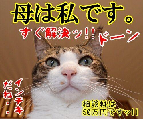 どんなことでもすぐ解決 猫の写真で4コマ漫画 4コマ目ッ