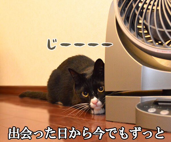 あなただけ見つめてる(大黒摩季) 猫の写真で4コマ漫画 2コマ目ッ