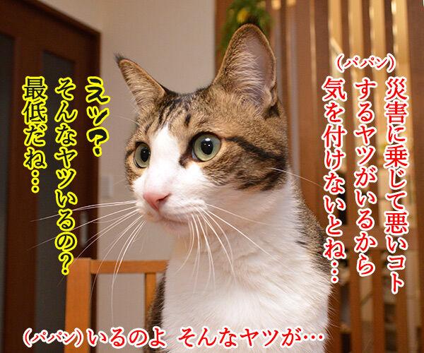 熊本地震 気を付けなくちゃいけないコト 猫の写真で4コマ漫画 2コマ目ッ