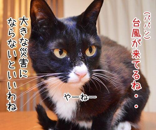 台風が来てるけど 猫の写真で4コマ漫画 1コマ目ッ