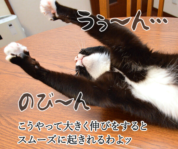 寝起きをスムーズにする方法って? 猫の写真で4コマ漫画 2コマ目ッ