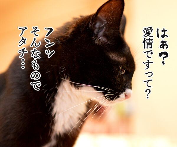あずき食堂にて 猫の写真で4コマ漫画 3コマ目ッ
