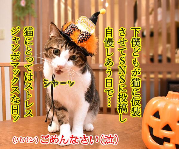 ハロウィンってどんな日? 猫の写真で4コマ漫画 2コマ目ッ
