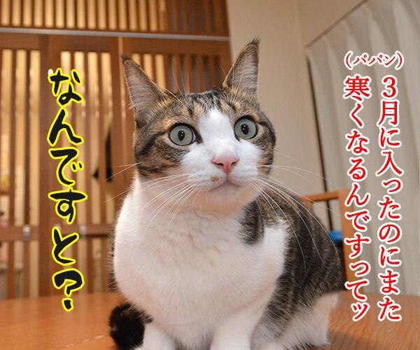 保険に入ろうと思って… 猫の写真で4コマ漫画 1コマ目ッ