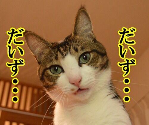 ナツカCM 其の一 猫の写真で4コマ漫画 1コマ目ッ